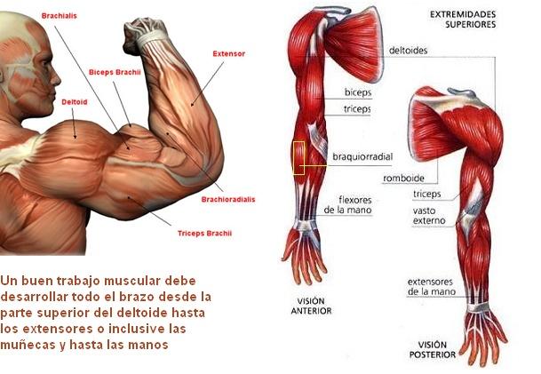 Sueños posibles para un brazo alucinante — MASmusculo STRONGsite ...